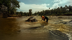 Saturdays are bathing day (Renate Bomm) Tags: elefant srilanka tiere rambukkana sabaragamuwaprovince river mahaweliriver elephantorphanageofpinnawella