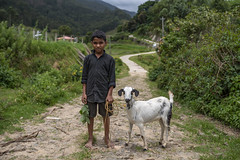 Boy and the Goat. (Ravikanth K) Tags: 500px boy goat lamb animal green munnar kerala kottakamboor outdoor path road fields livestock pet domestic portrait travel greenary midday full picture facingcamera