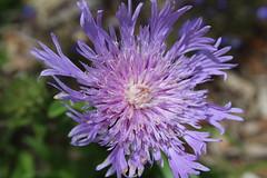 IMG_8389 (Usagi93190) Tags: macro proxi flower plant outdoors nature botanical gardens naples florida