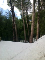 Findubois (Gilbert-Noël Sfeir Mont-Liban) Tags: schnee winter berg hiver neige montagne snow mountain woods bois bäume trees arbres kesserwan montliban liban mountlebanon lebanon