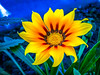 Hot flower (D D photography) Tags: photo photography sun flower yellow sunny heat shine shining flowers nature plant green night orange f32