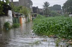 DSC_5852 (madelinedahm) Tags: urbanflooding srilankaflood srilanka colombo kelaniganga floodplain drainagedisaster risk reduction iwmi