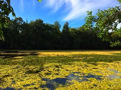 Pond Algae on Brodie duckpond as seen from one of the hides. (ParkNeukPack) Tags: pondalgae hide duckpond brodie slowshutterapp iphone