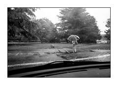 (Oeil de chat) Tags: nb bw monochrome film pellicule argentique kodak trix voigtlander bessa r2a colorskopar 35mm streetphoto photoderue pluie parapluie flou urbain contraste