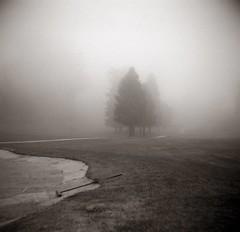 Rake (efo) Tags: bw film firstsix fog golfcourse rake sandtrap trees elcerrito california
