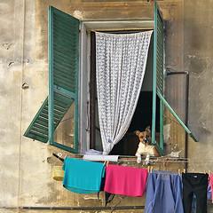 Ventimiglia Alta - Alla finestra (FM54TO) Tags: liguria ventimiglia cittàvecchia finestra cane casa