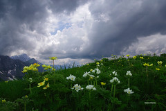 Fiori e nuvole (stefano.chiarato) Tags: fiori flowers nuvole clouds montagne mountains valdiscalve bergamo lombardia italy paesaggio panorami landscape natura naturalmente pentax pentaxlife pentaxk70 pentaxart