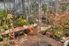 Plants growing in a Greenhouse in Winter (JacobBoomsma) Tags: potted flower cultivation pot agriculture sprout grow hothouse shop cultivate pavilion nobody growth store indoor plant glasshouse greenery inside garden greenhouse floral growing gardening production many nature duluth educational plants planters pots biospheres