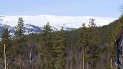 Mountain 1.4, Telemark, Norway (Knut-Arve Simonsen) Tags: rauland telemark norge норвегия norway noruega norwegen norvegia norvège नॉर्वे 挪威 ノルウェー நோர்வே νορβηγία sydnorge sørnorge østlandet norden scandinavia скандинавия