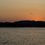 The last twilight flight thumbnail