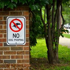 no dog pooping (brown_theo) Tags: german village columbus ohio no dog poop pooping sidewalk brick street front