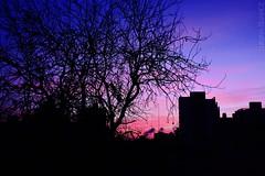 Óleo de un amanecer esteño. (Hard to be a girl.) Tags: amanecer sunrise arbol temperaturacolor rosado pink temperature tree cold frio invierno laplata buenosaires winter argentina silouetas silouettes