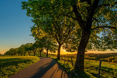 Light and Shadow (impossiblejoker) Tags: sonne sonnenlicht schatten stimmung sonnenuntergang natur trees sunset countryroad light shadow d610 nikon landscape