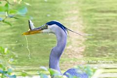 IMG_7941 (nitinpatel2) Tags: bird nature nitinpatel
