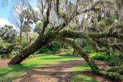 Tree Over The Pathway (Robert F. Carter Travels) Tags: boktower boktowergardens florida lakewales paths pathway pathways resurrectionfern trees path green