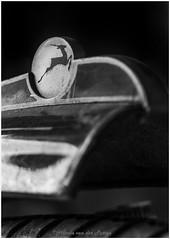 spatbord fiets (Hetwie) Tags: fiets transport macromondays macromaandag merknaam macrounlimited spatbord macro brandsign mudguard bike logogazelle gazelle transportation omafiets