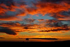 Lonely tree (Juan Anza) Tags: naturewatcher naturepics naturelover natureza sãojoaquim santacatarina brazil sky sol sun sunset sunrise tree