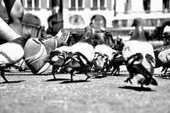 Who are you ?? (jaume zamorano) Tags: blackandwhite blancoynegro blackwhite blackandwhitephotography blackandwhitephoto bw catalunya d5500 ground dove monochrome monocromo nikon noiretblanc nikonistas pov street streetphotography streetphoto streetphotoblackandwhite streetphotgraphy streetphotograph urban urbana