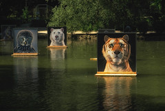 pictures (try...error) Tags: lagacilly festival picture photo photographer tiger owl bear baden timflach gallery art pool artgallery water nature travel urban urbanarte wildlife lion lioness