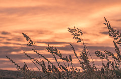 Summer Bliss (garethleethomas) Tags: evening summer grass landscape sunset sky colour uk wales tree plant