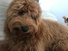 Ginger's beautiful girl Skylar!
