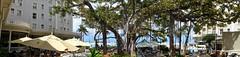 photo - The Banyan Tree at the Moana (Jassy-50) Tags: photo waikikibeach waikiki honolulu oahu hawaii banyantree banyan tree patio umbrella westinmoanasurfriderhotel moanasurfriderhotel moanahotel moana hotel westinhotel panorama courtyard htmt tmt