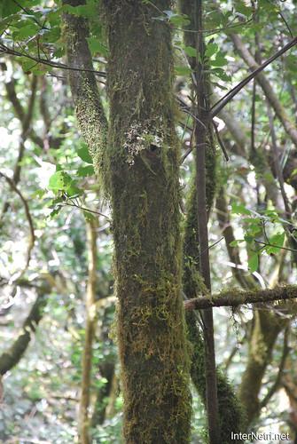 Національний парк Гарахонай, Гомера, Канарські острови  InterNetri  0723
