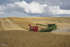JD krajina (Adam Masár) Tags: summer outdoor working first entry field colza agriculture farming farm fields raps combine landscape country sky mountain road grass johndeere power