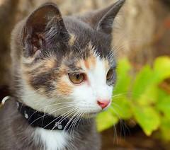 #cat #cute #beutiful #macro #photo #nature #camera #cool (fridastavegard) Tags: cat cute beutiful macro photo nature camera cool