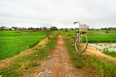 Bicycle parked on a path between rice fields (BryonLippincott) Tags: asia asian southeastasia vn vietnam vietnamese vietnameseculture countryside farm farming hanoi agriculture rural ruralscene farmscene farmland rice ricepaddy paddy mountains fog haze houses country industry production growing flooded community mud water fields landscape rurallandscape bicycle vietnamesehat hat parked