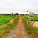 Bicycle parked on a path between rice fields