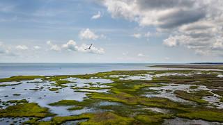 Gulls-eye View Of Nelson Bay - 071318-124137