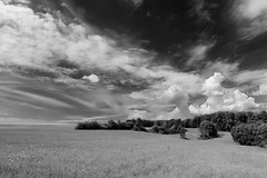 landscape . (helmet13) Tags: d800e raw bw landscape nature summer field sky clouds wood trees silence rural aoi peaceaward world100f platinumpeaceaward flickrheroes