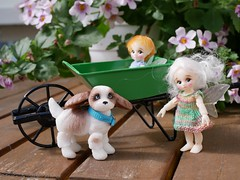 """I thought you said Little puppy?"" (steen76) Tags: knitting miniature puppy daisydayes nanofairy bjd micro bluefairy"