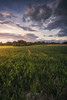 Dreamy fields (Manuel.Martin_72) Tags: switzerland enchanting magic fields agriculturefield grass green hilly leaves plants trees clouds glow sunset evening wbpa first zürich ch