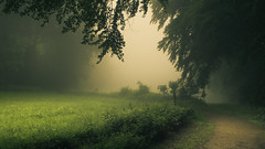 Green (Netsrak) Tags: baum bäume eu europa europe forst landschaft natur nebel wald fog forest landscape mist nature tree trees woods