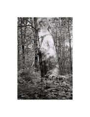 5. (kotmariusz) Tags: trees tree suburbs poland świdnica swidnica polska drzewo monochrome monochrom monochromatic monochromatyczny analog analogowa 35mm filmphotography olympusom40 ilfordxp2 nature natura przyroda przedmieścia
