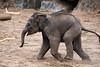 Elephant 18-06-18 (1) (R.J.Boyd) Tags: chester zoo wildlife north northwest england animal park mammals elephant asia big