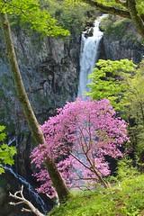 華厳滝 Kegon Falls (Brian Aslak) Tags: 華厳滝 kegonfalls nikko 日光 nikkō 栃木県 tochigiprefecture 関東 kanto honshu japan nihon asia 日本 日光国立公園 nikkōnationalpark waterfall