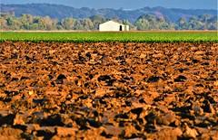 June28Image3247 (Michael T. Morales) Tags: farm plow tractor plowing discs metal field salinasvalley montereycounty