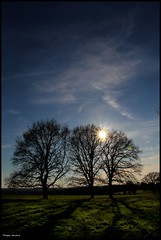 Saint Mars la Brière (Sarthe) (gondardphilippe) Tags: saintmarslabrière sarthe maine paysdelaloire ciel sky ombre shadow arbres trees zen