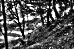 18-183 (lechecce) Tags: 2018 landscapes nature blackandwhite sharingart flickraward art2018 trolled stealingshadows shockofthenew artdigital