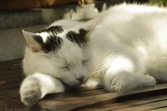 Sunday...Sunday... (martinap.1) Tags: cat caturday catportrait catmoments chat katze kitty kätzchen kitten kedi kat kot kissa katt kato nikon nature nikond3300 nikon105mmmacro natur light licht lazy haustier pet portrait