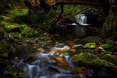 Enchanted Brook (Photo by Levin) Tags: riversandstreams cradlemountain australia general landscapes places tasmania