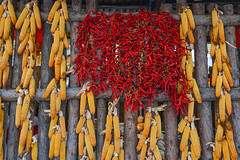 Hanging red chilli on wooden wall (phuong.sg@gmail.com) Tags: asia background board burning cayenne chile chili chilli china closeup cook cooking cuisine detail dried dries drying eating fiery flavoring food fresh freshness hanging harbin healthy heat heilongjiang hot ingredient jilin kitchen nature old organic paprika pepper pile red ripe seasoning shanghai spice spicy taste texture vitamin wooden