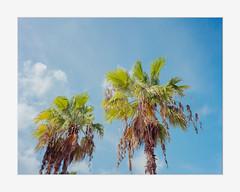 Turks & Caicos on Film (Pali K) Tags: analog filmisawesome filmphotography filmisnotdead fujifilm ga645w 6x45 mediumformat 120film colornegative jobocpp2 tetenalc41 eversmartsupreme scitex ishootfilm istillshootfilm ilovefilm
