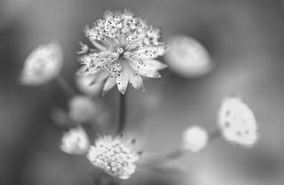 Delicate Embellishments