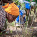 USAID_PRADDII_CoteD'Ivoire_2017-143.jpg