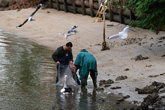 Any Fish for Us? (armct) Tags: seagull pelican silvergull gull chroicocephalusnovaehollandiae pelecanus conspicillatus creek fishing estuary currumbin queensland goldcoast saturday morning recreation