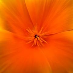 Orange (chdphd) Tags: stonehaven aberdeenshire kincardineshire